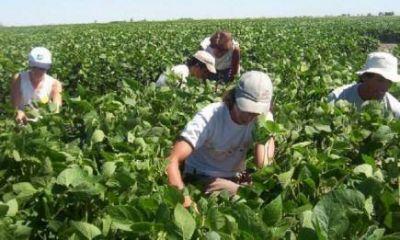 El INYM ya financió más de $800 millones para la compra de hoja verde y yerba canchada