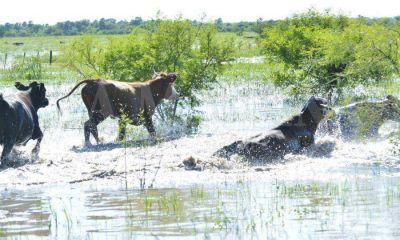 Créditos para productores en emergencia agropecuaria