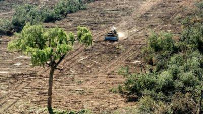 Cambio climático: las áreas verdes crecen en el mundo, pero en Argentina se reducen