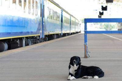 Por problemas en un puente y en los durmientes de las v�as, el tren hace 9 meses que no llega