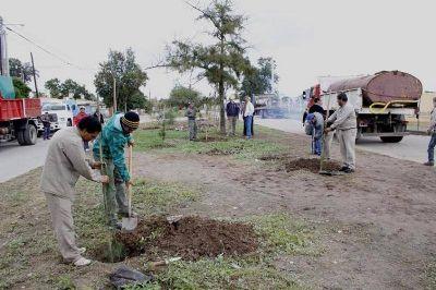 Realizan la reposición y plantación de árboles en la ciudad
