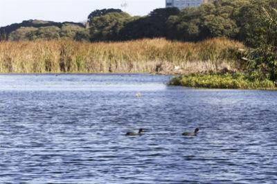La Reserva Ecol�gica y la historia de como la naturaleza resisti� los cambios