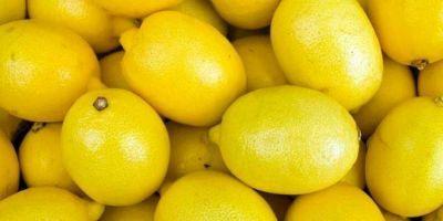 Gira clave para avanzar en el reingreso del lim�n tucumano a Estados Unidos