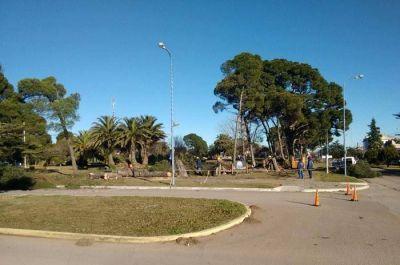 Malestar del concejal Antón por la extracción de árboles en la plaza central