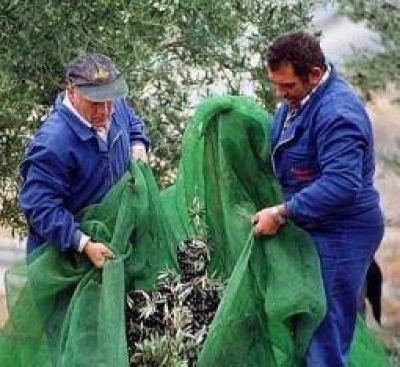 """El sector olivícola habla de """"pérdida irreversible"""" de empleo"""