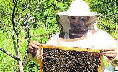 Ya hay 90 trabajos de investigación para simposio mundial de apicultura