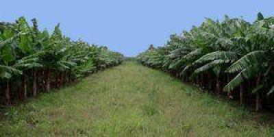 Entre este viernes y el lunes pagar�n la Emergencia Agropecuaria en Formosa