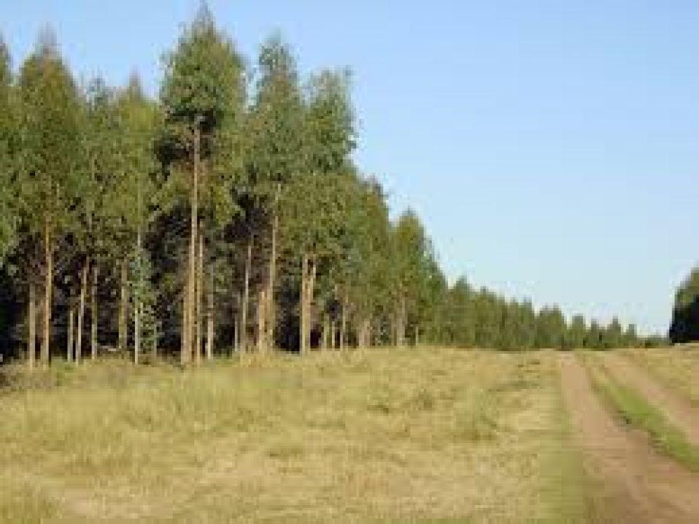Salta se incorpora al Sistema Nacional de Guías Forestales