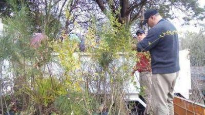 Plantarán 950 árboles en la localidad de Pellegrini