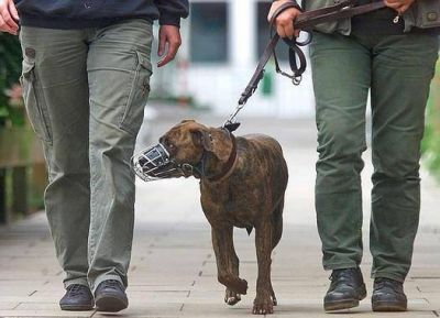 La Polic�a Local no har� controles de perros �peligrosos�