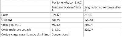 Yerba Mate: Oficializaron aumento de 25 por ciento para tareferos