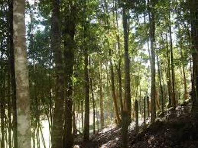 El Ministerio de Ambiente avanza con un programa dirigido a las comunidades que viven de los bosques