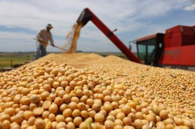 El fondo de la soja subió un 43% en el primer semestre en La Pampa