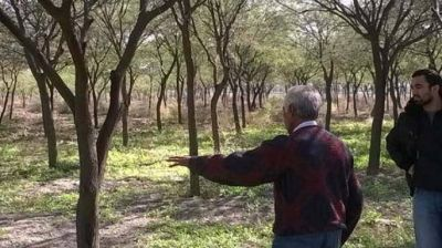 Beneficiar�n a campesinos con el manejo sustentable de bosques