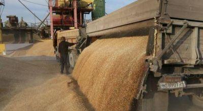 La exportaci�n de trigo en Bah�a Blanca creci� un 130% durante los primeros seis meses del a�o