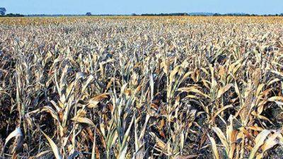 Del campo a la góndola, el precio de los productos agrícolas se multiplicó 5,2 veces en junio