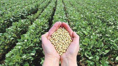 La soja volvió a bajar y perforó los u$s 370 en Chicago