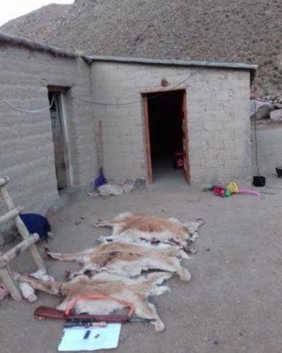 La secretaría de Ambiente incautó una importante cantidad de fibra de vicuña