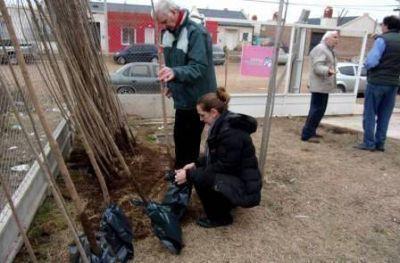 Dafas sigue entregando gratuitamente árboles