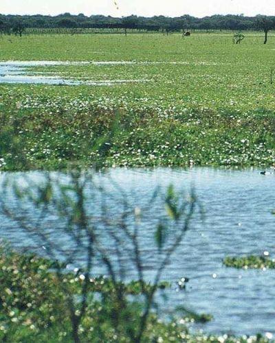 El gobierno realizará un Inventario Nacional de Humedales