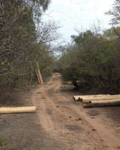 Incautan unos 1.500 rollos de palo santo, especie protegida