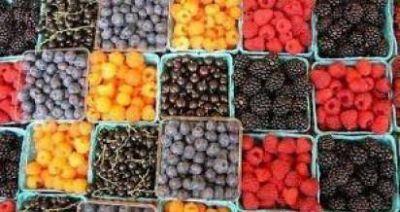 Preocupa a los productores de fruta fina de Río Negro y Chubut la importación desde Chile