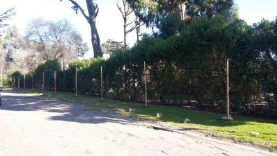 Más de 150 árboles de vereda fueron plantados o repuestos en la ciudad