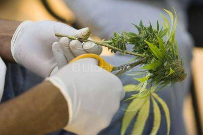 En Santa Fe se form� una asociaci�n de usuarios de marihuana medicinal