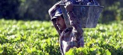 Licitan $250 millones para créditos Pymes de economías regionales