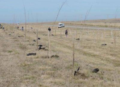 Comenzó la forestación intensiva en rutas de la Cuenca del Morro