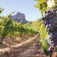 Cae el consumo de vino y golpea al la vitivinicultura riojana