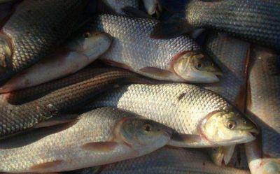 Pesca: Santa Fe reclama a la Nación manejar los cupos de exportación