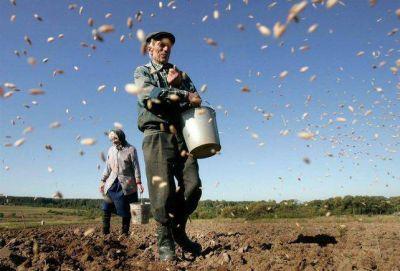 El �rea sembrada de trigo creci� el 34,4% y se prev� una mayor inversi�n