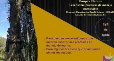 Bosques nativos: Prácticas de manejo sustentable