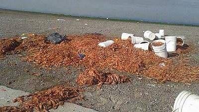 Buscan darle una solución definitiva a los residuos pesqueros