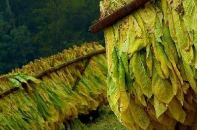 Tabaco: La Provincia pagar� la segunda vuelta del FET la semana pr�xima