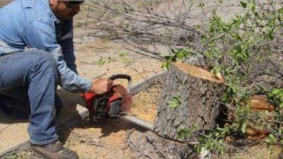 El 30% de los árboles en la capital salteña fueron podados de manera ilegal