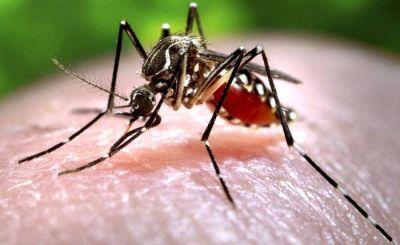 Salen a timbrear para explicar por qué hay que prevenir el dengue también en invierno