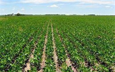 Impulsan cambios en la ley de semillas para acotar la figura del
