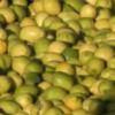 Un desarrollo del INTI optimizar� la industria alimentaria y cosm�tica