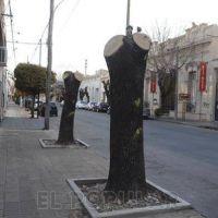 Espacios verdes: la poda mal hecha es lo que m�s preocupa en la ciudad