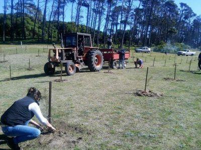 Miramar: comenzó el Programa Anual de Forestación en el vivero dunícola
