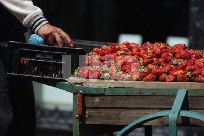 Frutillas: productores corondinos preocupados por la importaci�n
