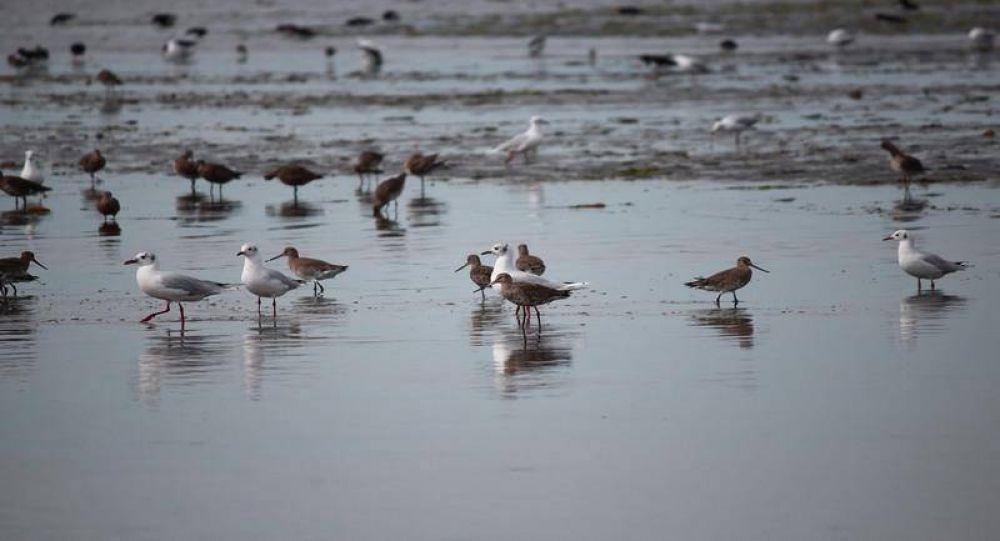 El municipio realizó conteo de aves acuáticas en la Reserva Costa Atlántica