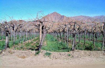 La Provincia asistirá financieramente a productores de Cafayate afectados por una helada
