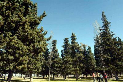 Rechazan el intento de talar árboles para un reservorio de agua