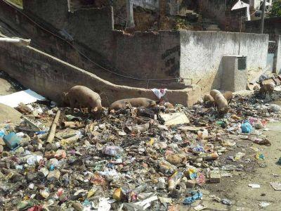 El otro lado de los Juegos Olímpicos: basura y cerdos ocupan las calles