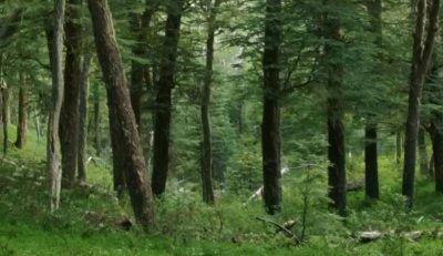 Greenpeace alertó sobre deforestaciones ilegales