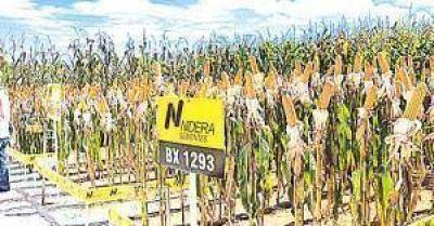 La cerealera Nidera ya es totalmente de capitales chinos