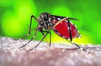El Municipio refuerza acciones para prevenir la aparici�n de mosquitos